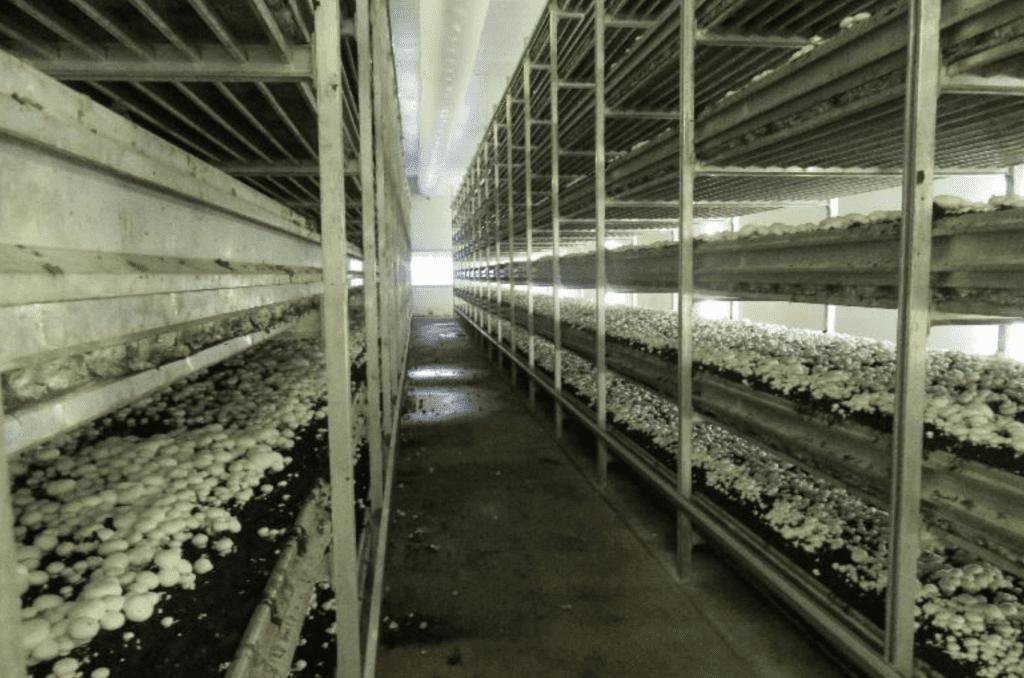 Mushroom Compost Q&A | Pennsylvania Association for Sustainable