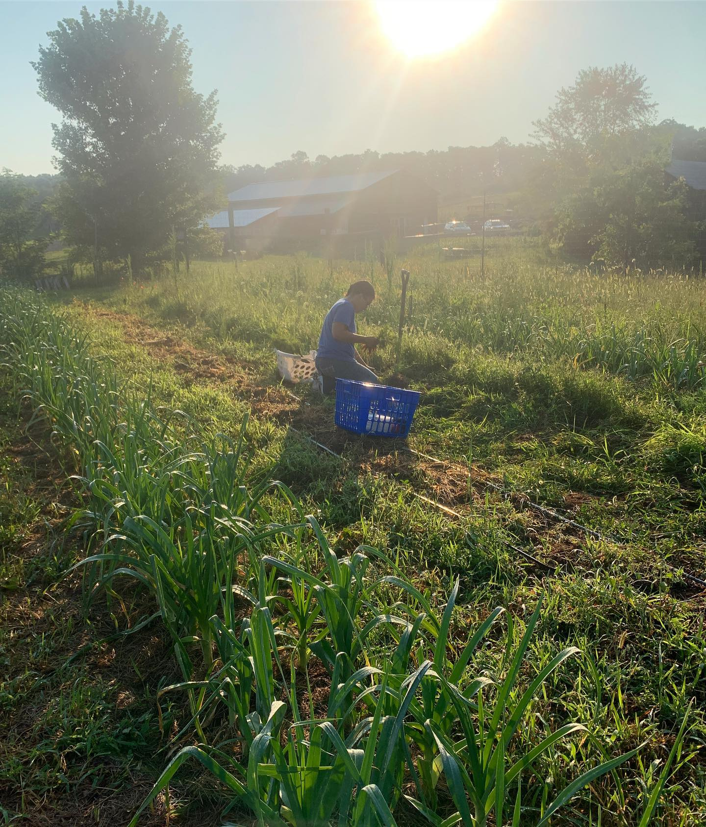 Spring 2020: Farmer Wanted for Small Certified Organic CSA Market Garden Operation