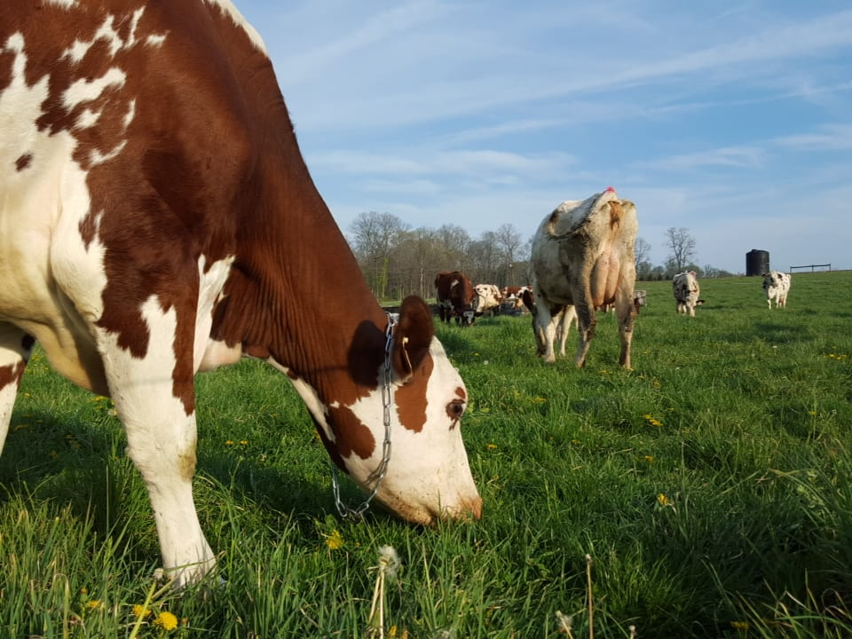Grass Fed Dairy Production Assistant