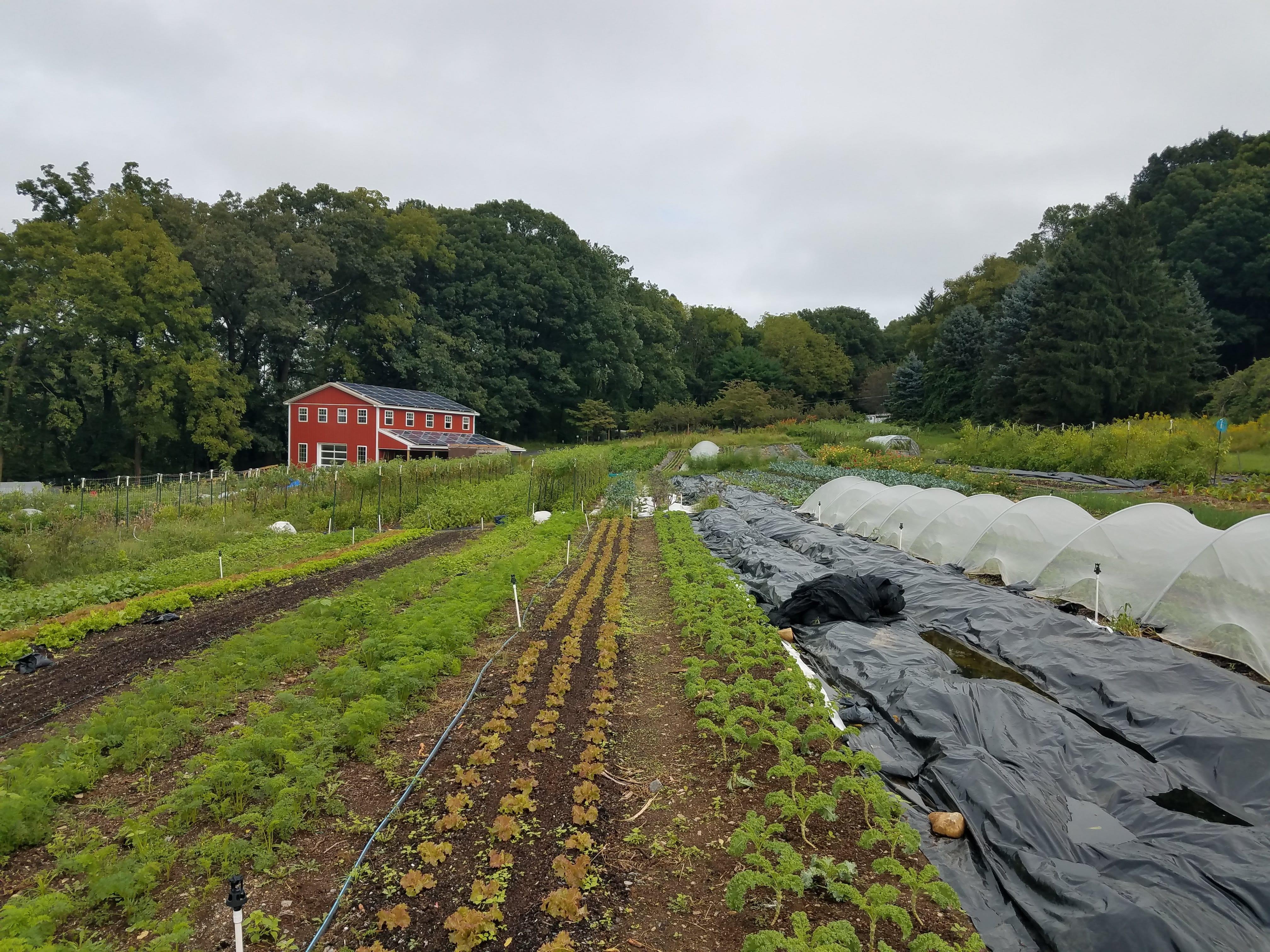 1.5 Acre No-till CSA Farm Hiring Main Season Farmhands for 2020