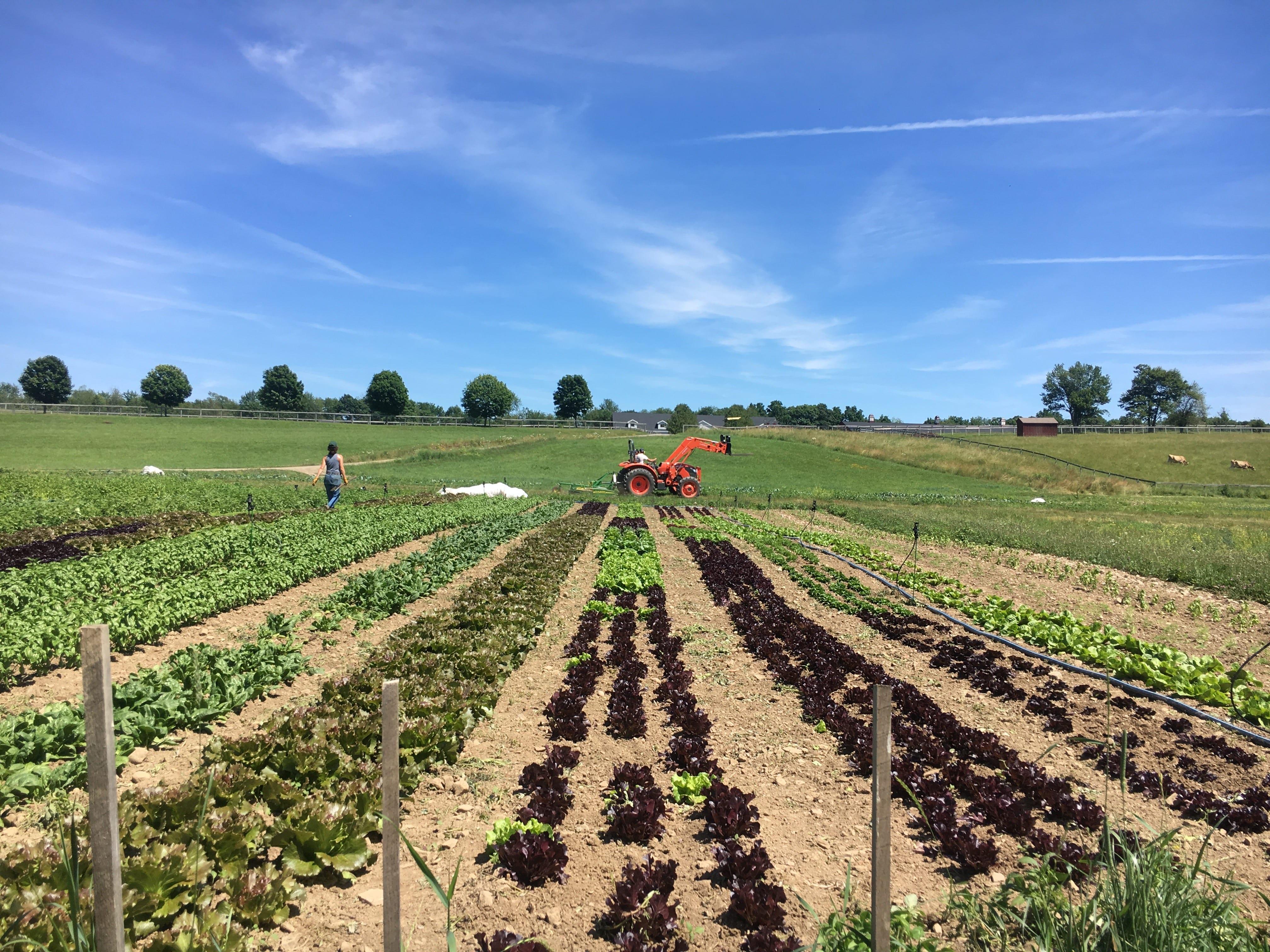 Liberty Farms seeks Garden Crew Members for 2020 Season!