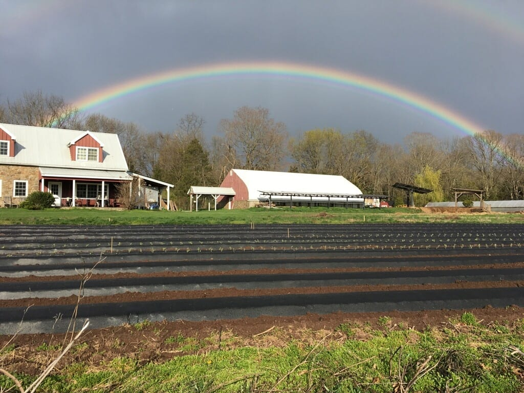 2021 Farmer for Rolling Harvest Food Rescue Donation Fields at Gravity Hill Farm