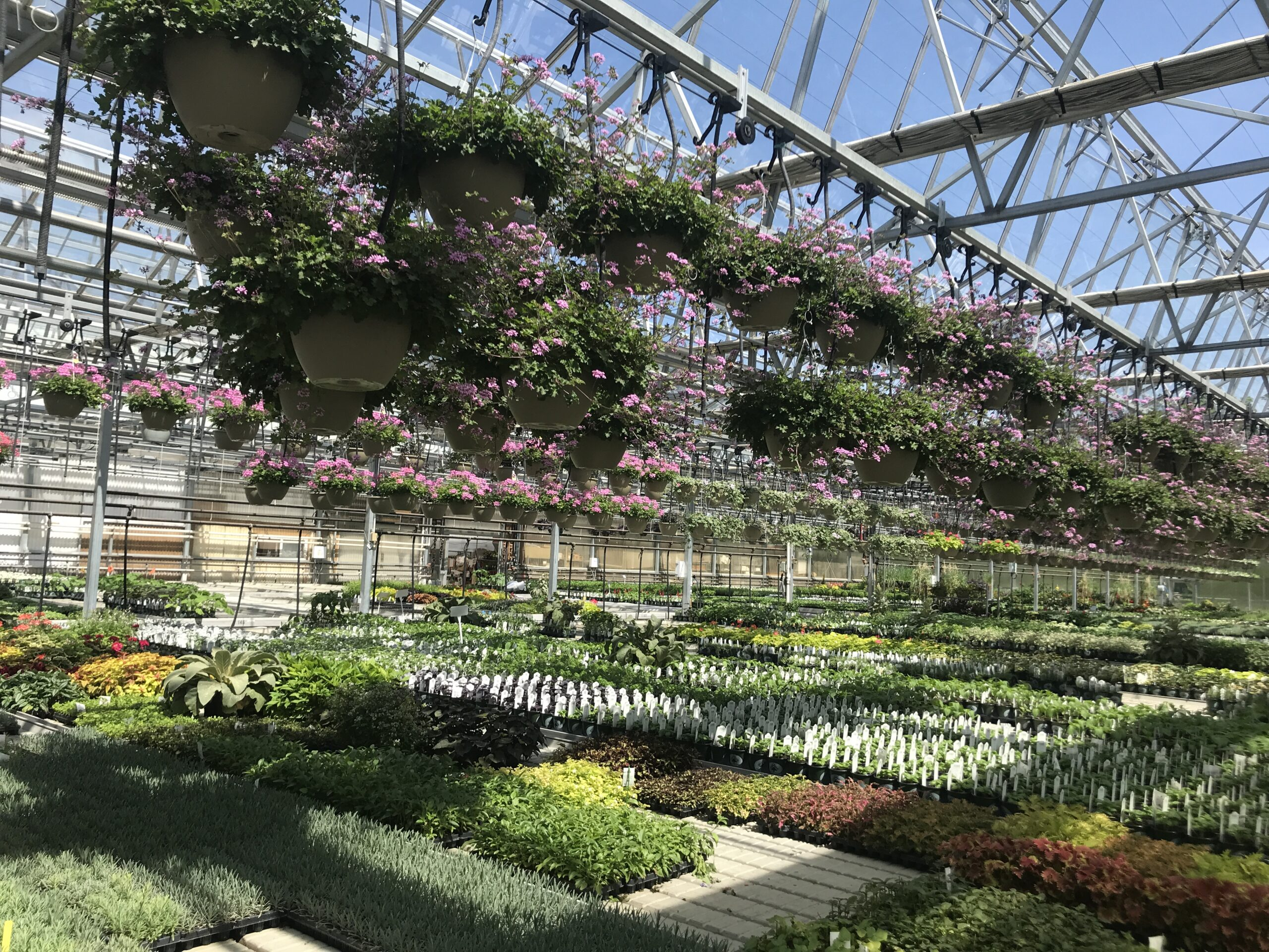 Hiring Greenhouse Assistants at Peace Tree Farm in Bucks County, PA