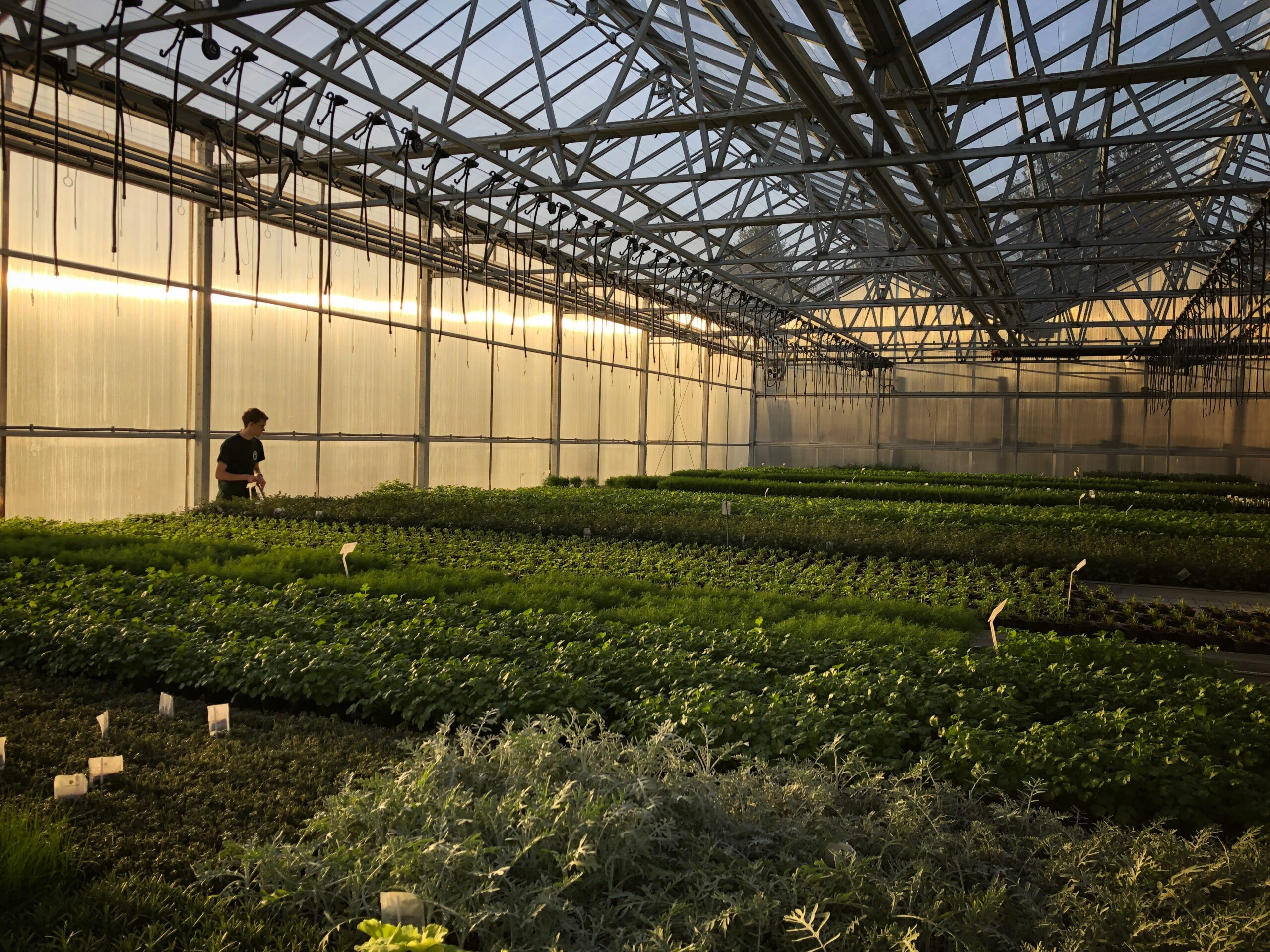 Hiring Greenhouse Office Assistant at Peace Tree Farm in Bucks County, PA