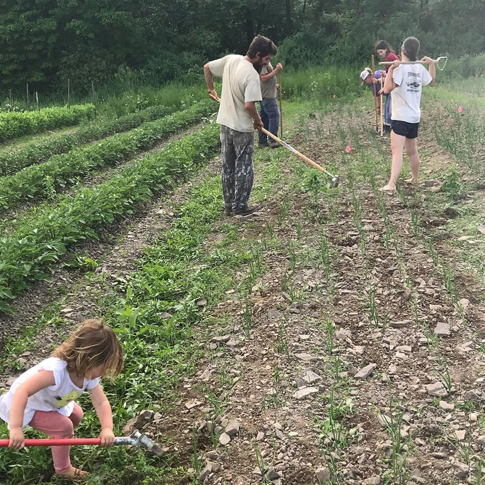 Highly Diversified, Farm seeks interns for 2021