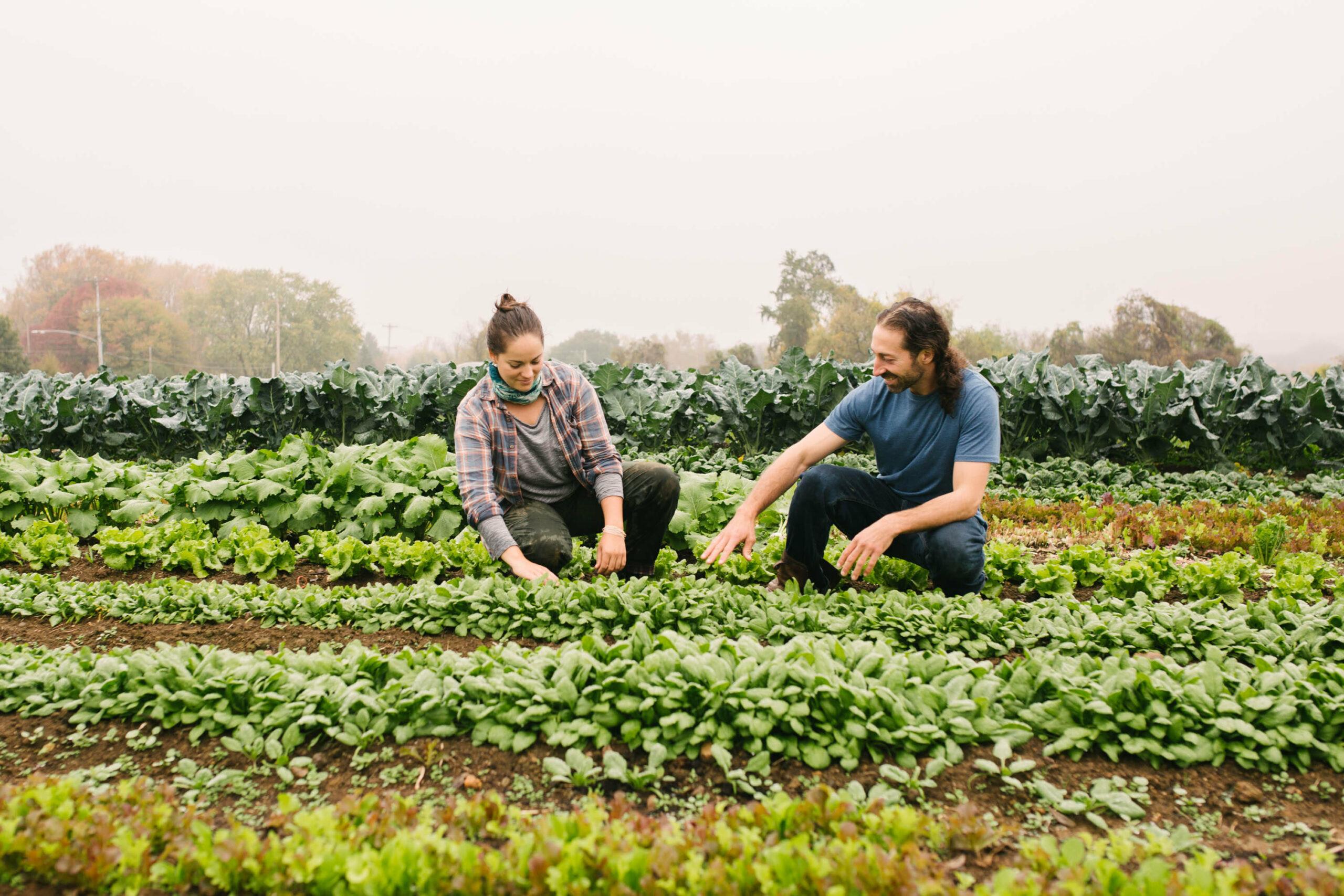 Love Grows hiring Field Assistants