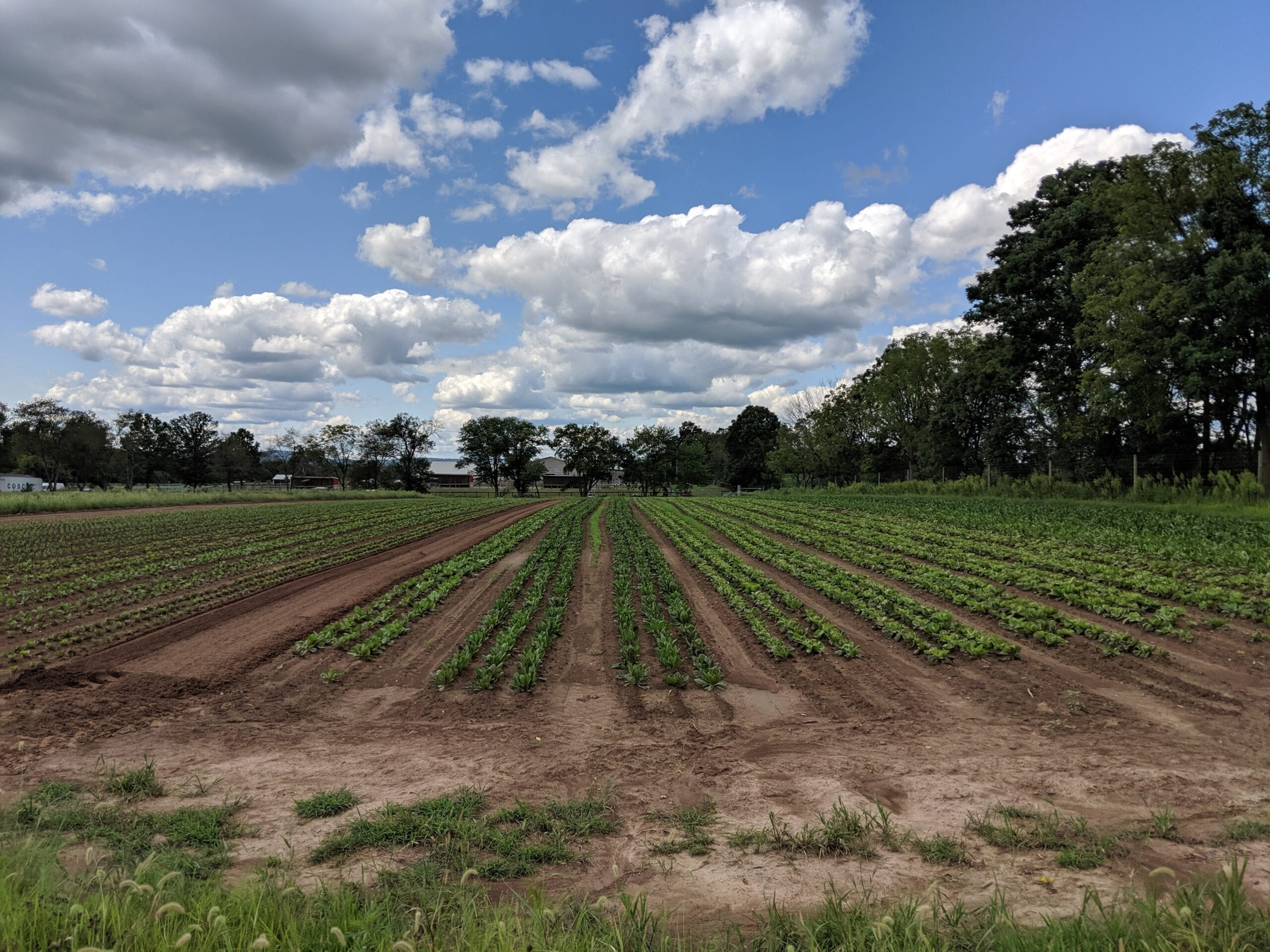 CAMPO ROSSO FARM CREW 2021