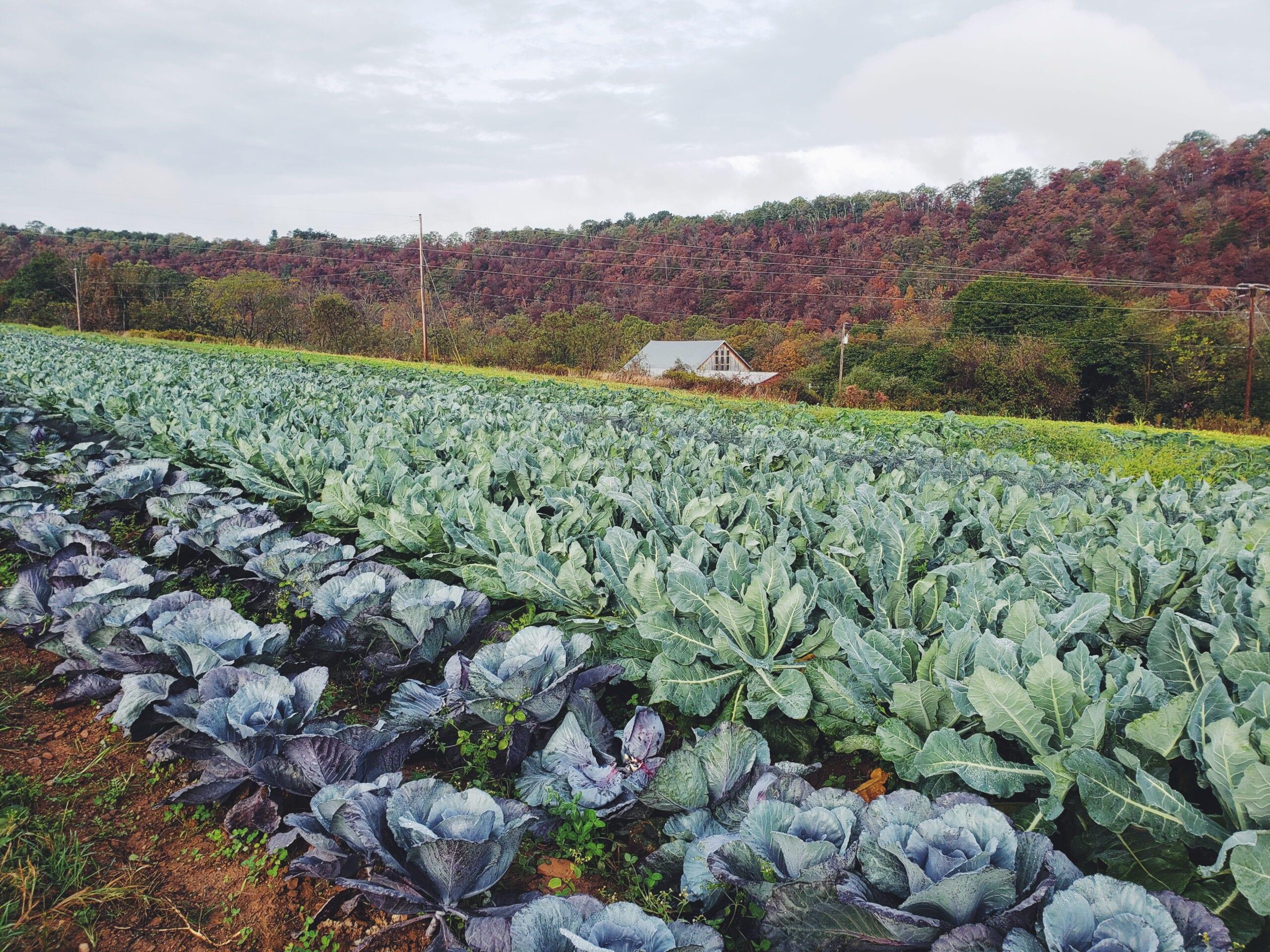 Soil Health Benchmark Study