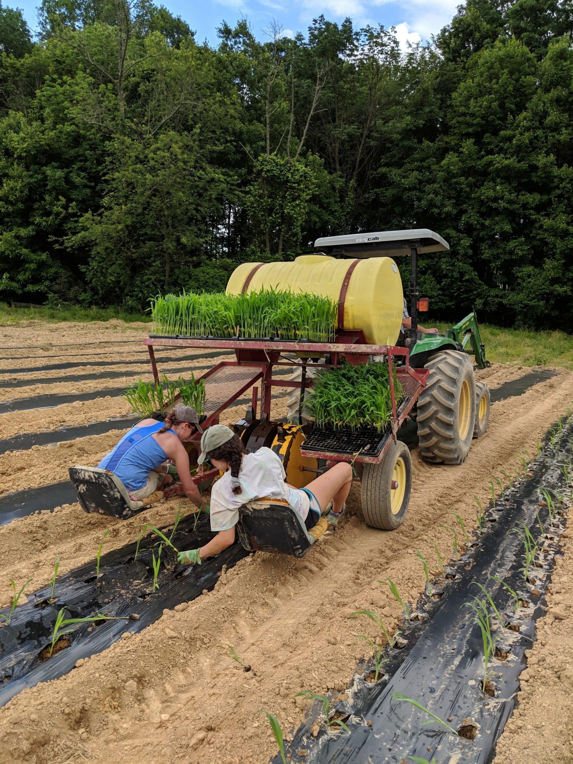 Certified Organic Produce CSA Farm Internship