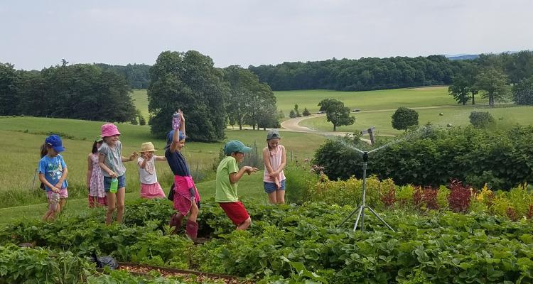 Food Systems/Farm to School Professional Learning Facilitator – Shelburne, VT